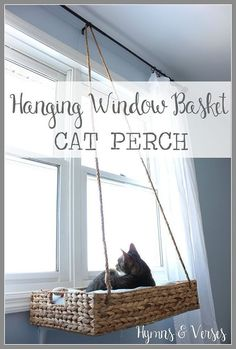 Use a hanging basket to make a DIY cat window perch! Provide cats with mental stimulation via a view, hopefully of some greenery or even birds.