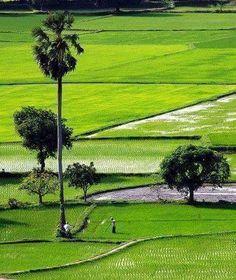 Beautiful Bangladesh ...