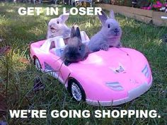LOL! Mean girls reference with BUNNIES :D so cute!