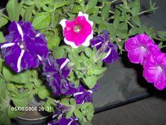 Corbi - My friends garden
