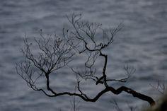 albero aggrappato alla scogliera
