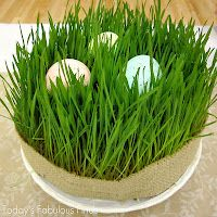 DIY ~ How to grow wheat grass tutorial including free printable