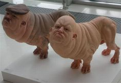 by Patricia Piccinini These sculptures show how using an almost totally human face intensifies the grotesque through it's contrast but total morphing with the body of a dog.
