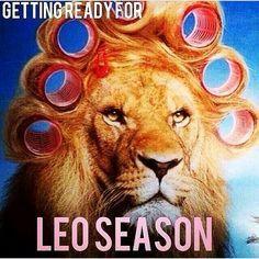 Getting ready for Leo season! Lion with rollers in its mane. Leo Horoscope, Leo Zodiac, My Zodiac Sign, Horoscopes, Astrology Zodiac, Astrological Sign, Leo Season Memes, All About Leo, Leo Quotes