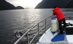 Our small and intimate cruise allows you to get closer to the wildlife in Doubtful Sound, New Zealand. www.doubtfulsound.com Cruises, Wilderness, New Zealand, Closer, Waterfall, Wildlife, Southern, River, Nature