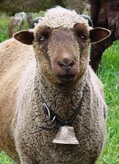 """The Secret Lives of Sheep - Part 38 The bell was driving Doris crazy and it didn't help to find out that E.A. Poe had written a poem entitled """"The Bells"""". Everyone knew he had gone """"around the bend"""" - did the bells cause it and was she next??"""