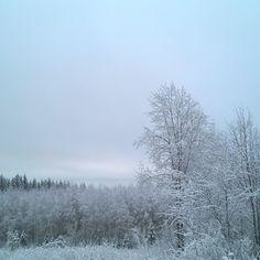 Jouluaaton kävelyhetki #joulu #christmas #lumi #suomi #nature #luonto