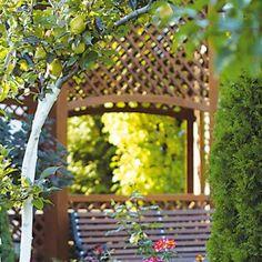 Je vhodné vysádzať tuje k ovocným stromom?