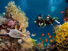 Tauchtauglichkeitsuntersuchung – damit Sie die faszinierende Unterwasserwelt unbeschwert genießen können! Die Tauchmedizin beschäftigt sich mit den Einflüssen auf den menschlichen Körper im und unter Wasser. Mehr als dreiviertel aller Erkrankungen bei Tauchern fallen in den Bereich der Hals-Nasen-Ohrenheilkunde. Neben einer tauchmedizinischen Beratung und Tauchtauglichkeitsuntersuchung stellen wir auch tauchmedizinische Bescheinigungen bzw. Atteste aus. Erfahren Sie mehr auf unserer Website. Sea Photography, Summer Photography, Great Barrier Reef, Mauritius, Maldives, Learn To Scuba Dive, Trou Aux Biches, Scuba Diving Certification, Normandie France