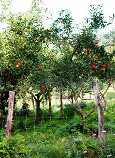 The orchard has been a component of the British landscape for many centuries and has a complex history. DNA evidence strongly supports the theory that of the almost 3,000 apple varieties that populate British orchards