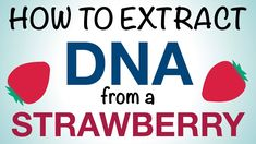 Science Mom Extracts DNA from a Strawberry