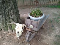 Old wheel barrel that was handmade. With a little touch of TX.