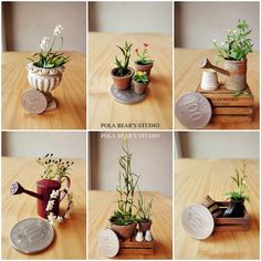 miniature plants by studio soo
