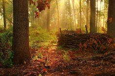 Blushing woods by jedzer - Pixdaus