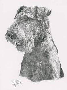 Portrait of an Airedale Terrier by Mike Sibley