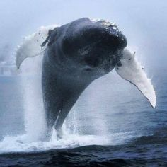 Humpback whale breaches in fog during a surreal, unforgettably close encounter