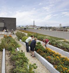 Rooftop views with garden component?