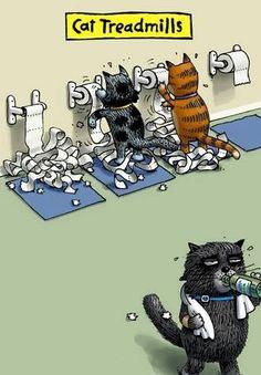Cat fitness center