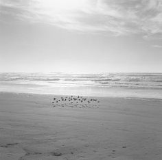 Robert Adams, Around the House, 2012