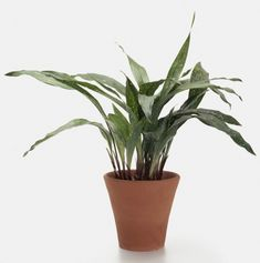 Low Light Houseplants With Brown Clay Large Indoor Plants And White. Low Light Houseplants With Brown Clay Large Indoor Plants And White… Indoor Plants Low Light, Indoor Plant Pots, Best Indoor Plants, Indoor Gardening, Outdoor Gardens, Indoor Cactus, Plant Stem, Indoor Flowers, Potted Plants