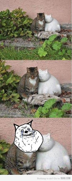 Forever alone lvl cat