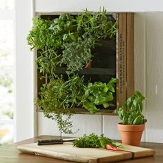 Wine Crate Vertical Wall Garden | VivaTerra