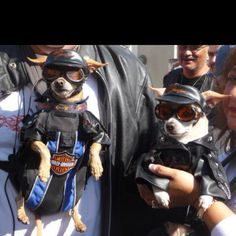 Cool biker dogs come in pairs! Great minds think alike, Doggles are COOL!