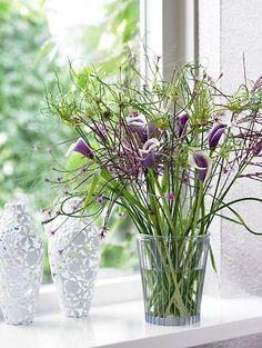 Zantedeschia 'Picasso', Calla Lily 'Picasso', Arum Lily 'Picasso', Calla Lilies, Arum Lilies, Zantedeschia care