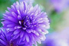 「紫 花」の画像検索結果