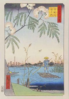 名所江戸百景 綾瀬川鐘ヶ渕 隅田川に旧綾瀬川が合流するあたりが描かれています。ネムノキの花が咲き、ヨシの穂が風にそよいでサギが飛ぶ隅田川を、ゆったりと筏で下る夏の風景です。ネムノキは開けた土地を好み鮮やかなピンク色の花をつけるので、帰化植物のように感じられることもありますが、日本から中国、東南アジアにかけて広く分布するマメ科の高木です。