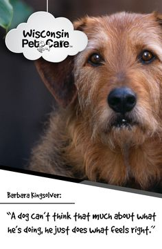 """""""Until one has loved an animal, a part of one's soul remains unawakened."""" #WisconsinPetCare"""