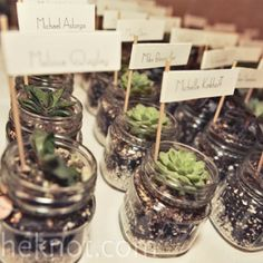Would be cute favors for a desert crowd.