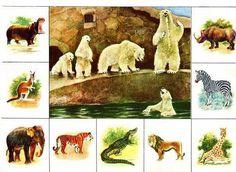 """A legfontosabb: Állatkert BINGO """"az állatvilágban"""" Kids Learning Activities, Infant Activities, Diy Toys And Games, Shapes For Kids, Bird Cards, Bible Crafts, Animals For Kids, Wild Animals, Animal Drawings"""