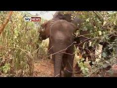 Growing demand of ivory in China, drives elephants at the brink of extinction! Ivory Trade, Fashion Marketing, Elephant, Elephants