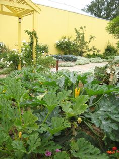 Our beautiful garden that was once next door. Full of seasonal produce.