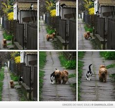 The story behind this picture is, every day at the same time the cat waits for him, he stops, and they go for a walk.