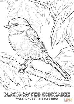 Black-capped Chickadee Coloring page Make your world more colorful with free printable coloring pages from italks. Our free coloring pages for adults and kids. Bird Coloring Pages, Free Printable Coloring Pages, Adult Coloring Pages, Coloring Books, People Coloring Pages, Bird Drawings, Animal Drawings, Sketches Of Birds, Drawing Animals