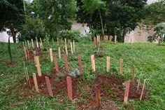 Horta comunitária foi plantada às margens do Igapó