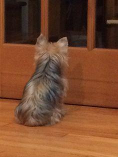 Waiting for his mum