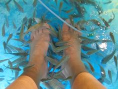 Fish Spas! - COOL! I've heard great things about Fish Spas... I want to do this...