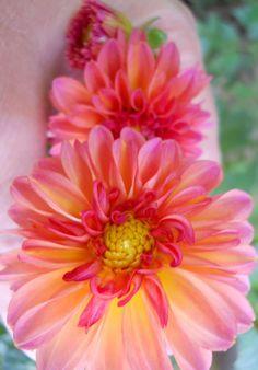 Pickin' flowers  Photo by Bren 2011