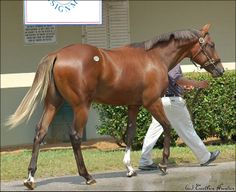 "OBS Select Yearling Sale | Flickr - Photo Sharing! ""Flaming Blues"""