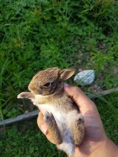 Found this cutie in my garden!
