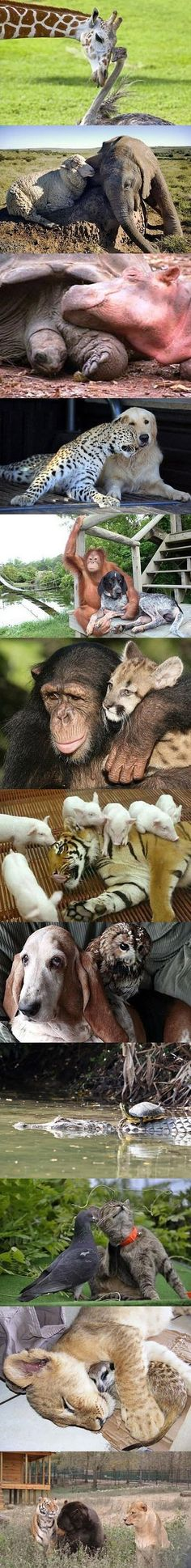 Unlikely Friendships #animals