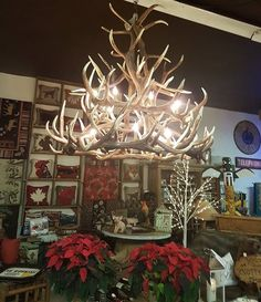 Elk 18 Antler Chandelier at a cute shop in Canada!