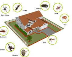 residential pest control company nyc http://ultrapropestcontrol.com/service/commercial-pest-control