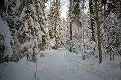 Зимний пейзаж в Подмосковье.(18)