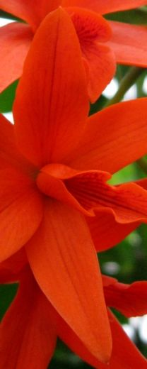 Brenda Ellison~Photographer - Stunning Orchid #red #nature