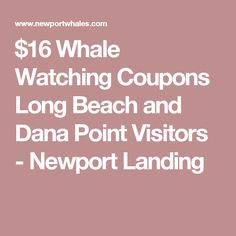 $16 Whale Watching Coupons Long Beach and Dana Point Visitors - Newport Landing