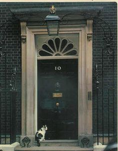 Humphrey - former Chief Mouser to the Cabinet Office.